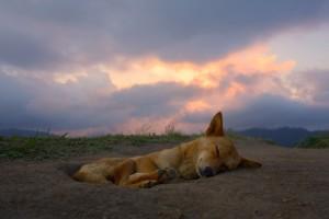 lap4_dog